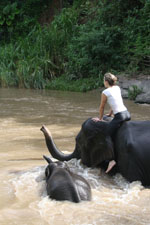 Elephant Riding, Mae Wang, Thailand